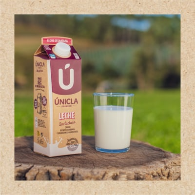 Can I consume Únicla milk if I'm lactose-intolerant?